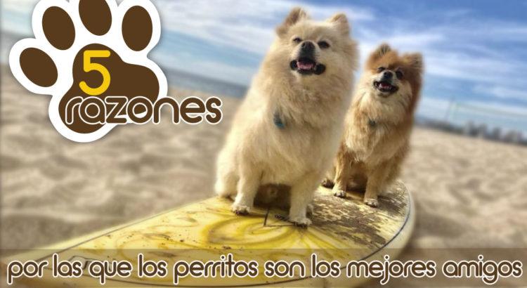razones-amigos-perritos-mejores